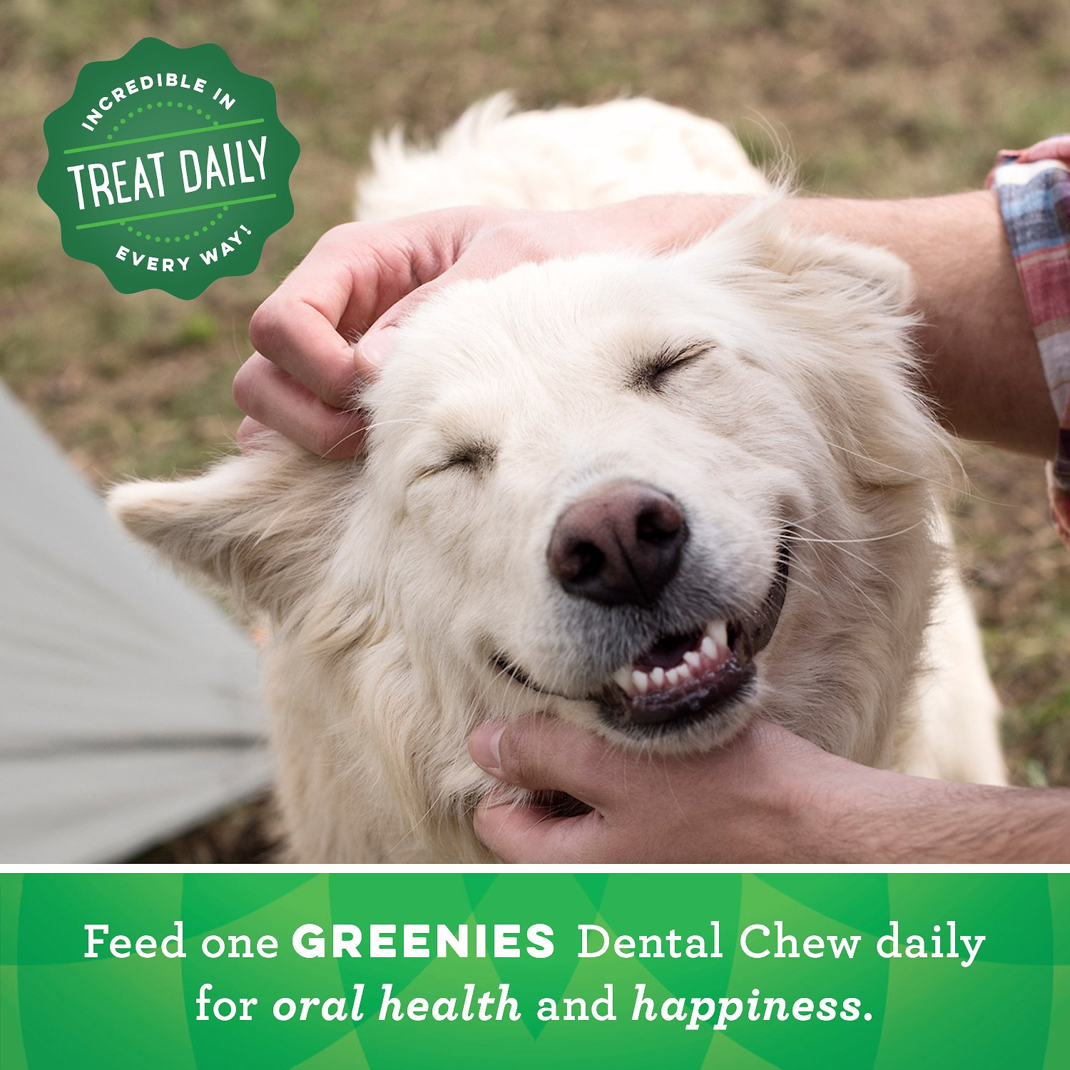 Image Result For Greenies Regular Dental Dog Treats Count Chewy Com