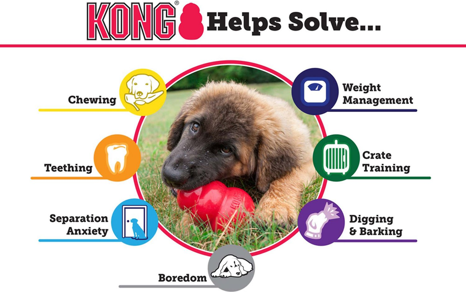 Kong Dog Kennel