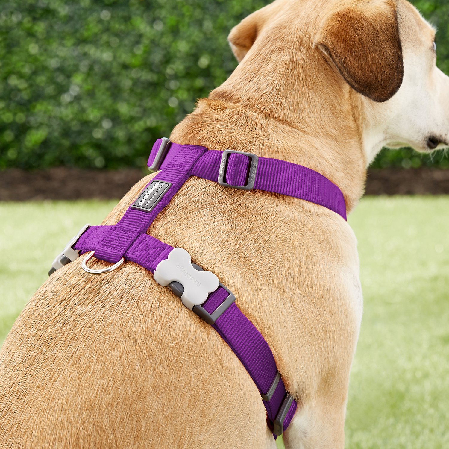 red dingo classic dog harness purple large. Black Bedroom Furniture Sets. Home Design Ideas