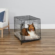 MidWest iCrate Single Door Fold & Carry Dog Crate, 36-in