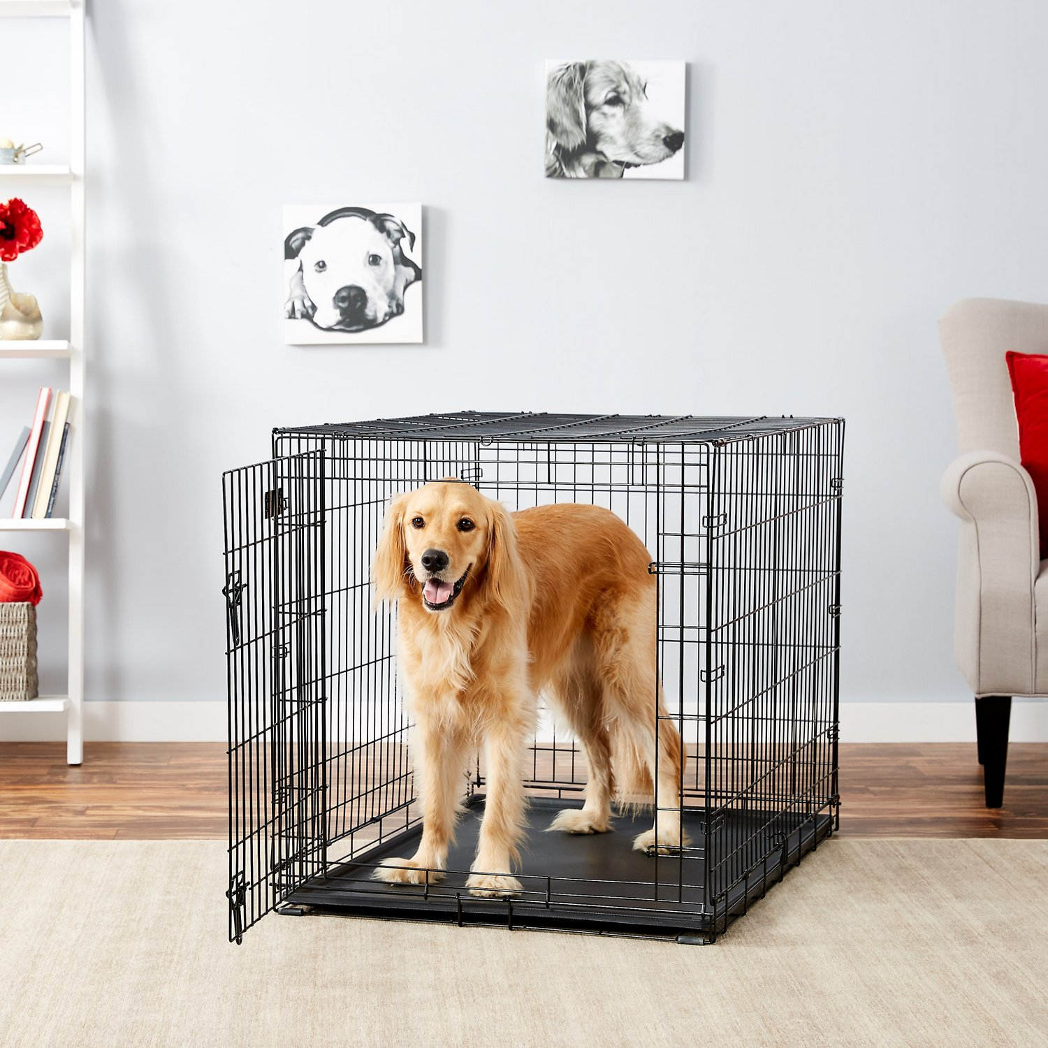 42″ Double Door Folding Metal Dog iCrate by Midwest
