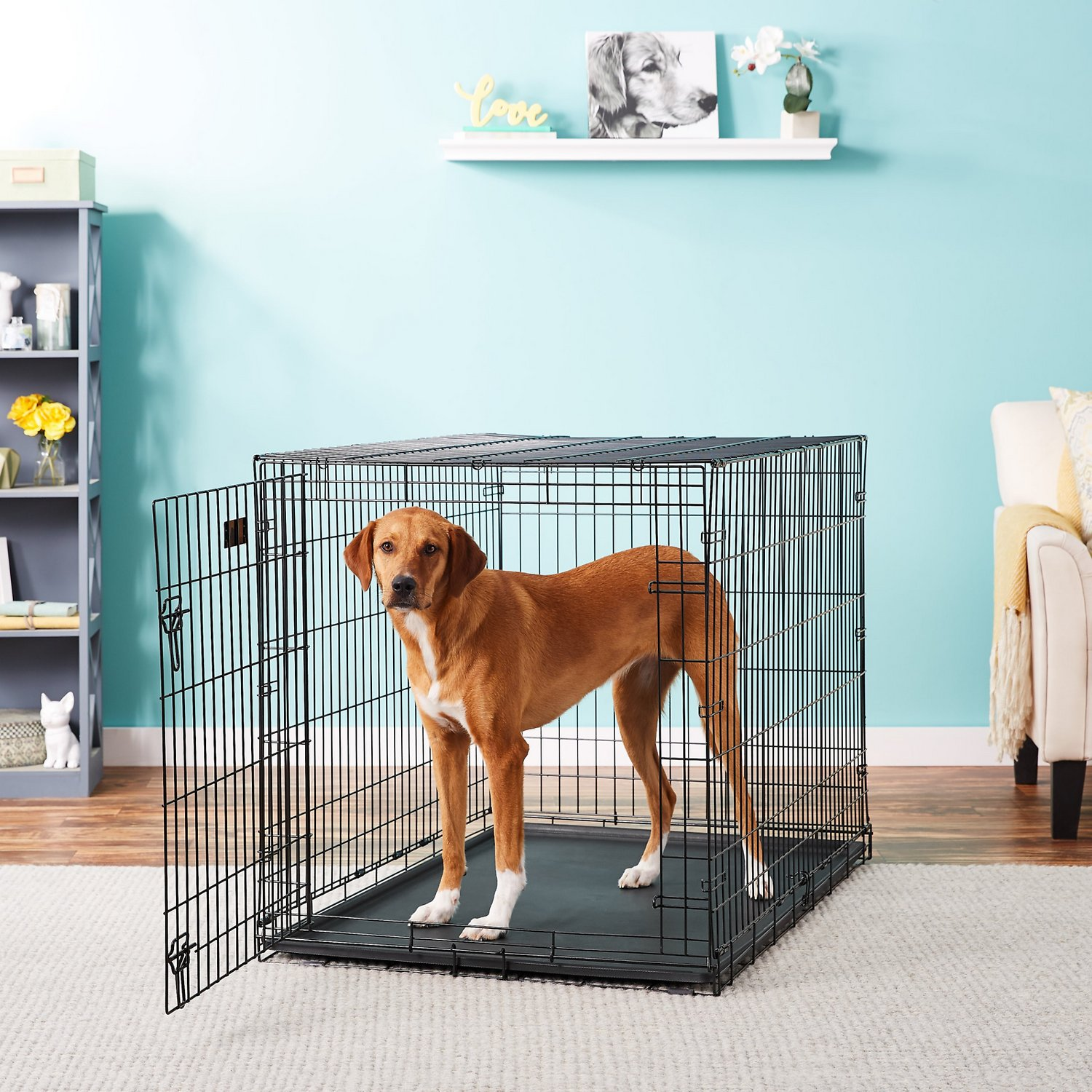 48″ Single Door Folding Metal Dog iCrate by Midwest