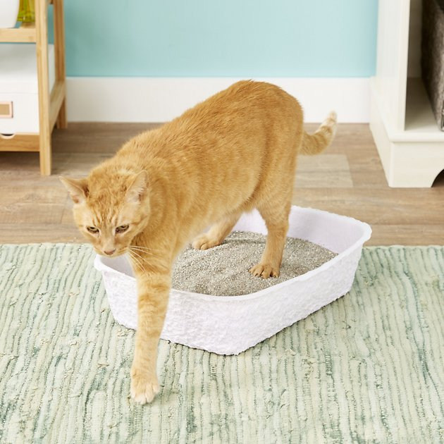 Nature S Miracle Disposable Cat Litter Box 3 Pack Chewy Com