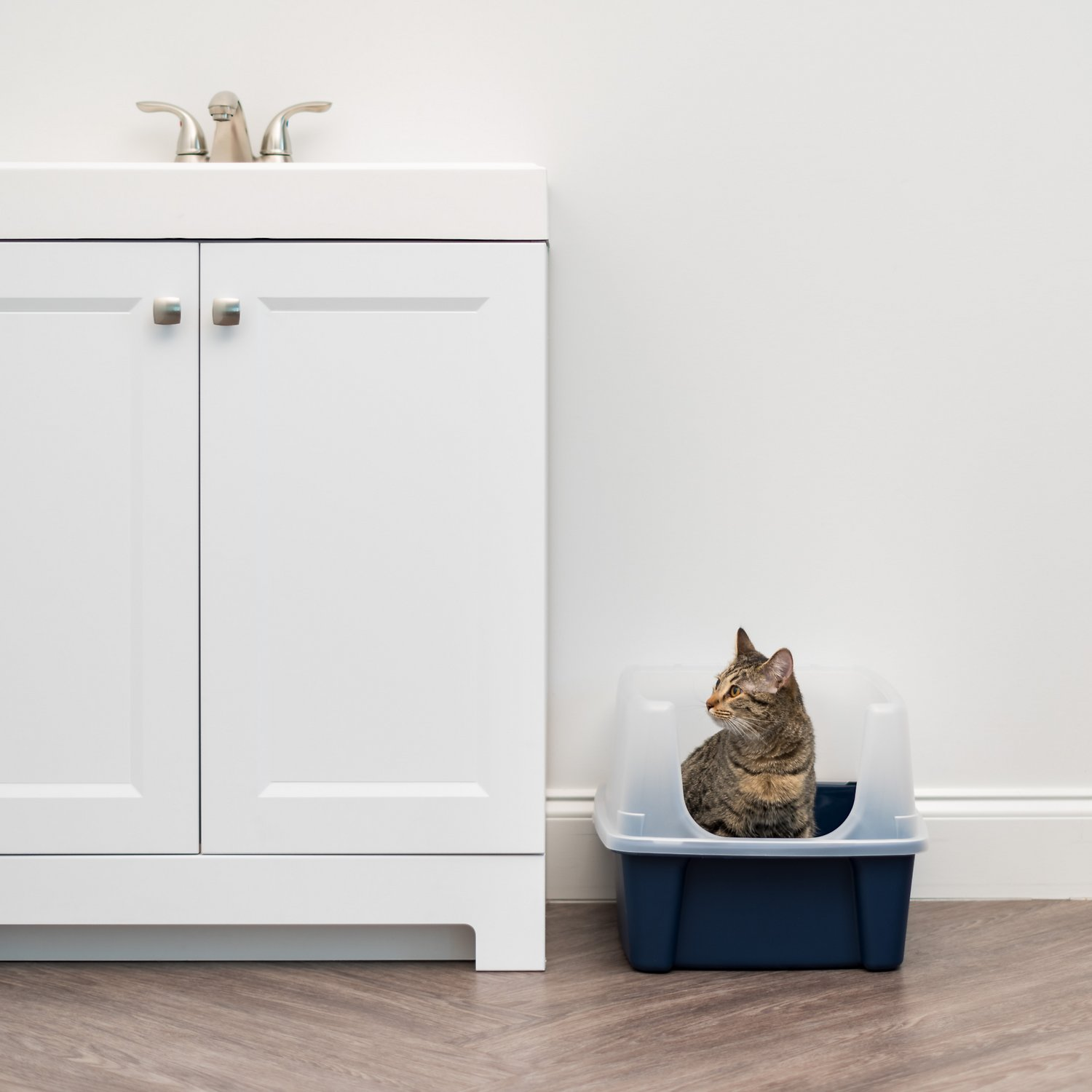 Iris Open Top Litter Box With Shield Chewy Com