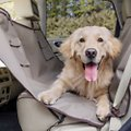 PetSafe Happy Ride Waterproof Hammock Car Seat Cover