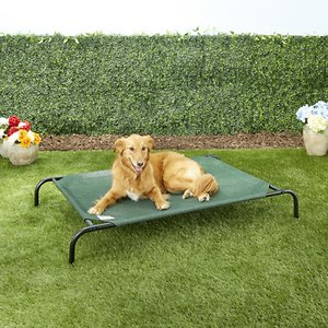 Best Elevated Bed