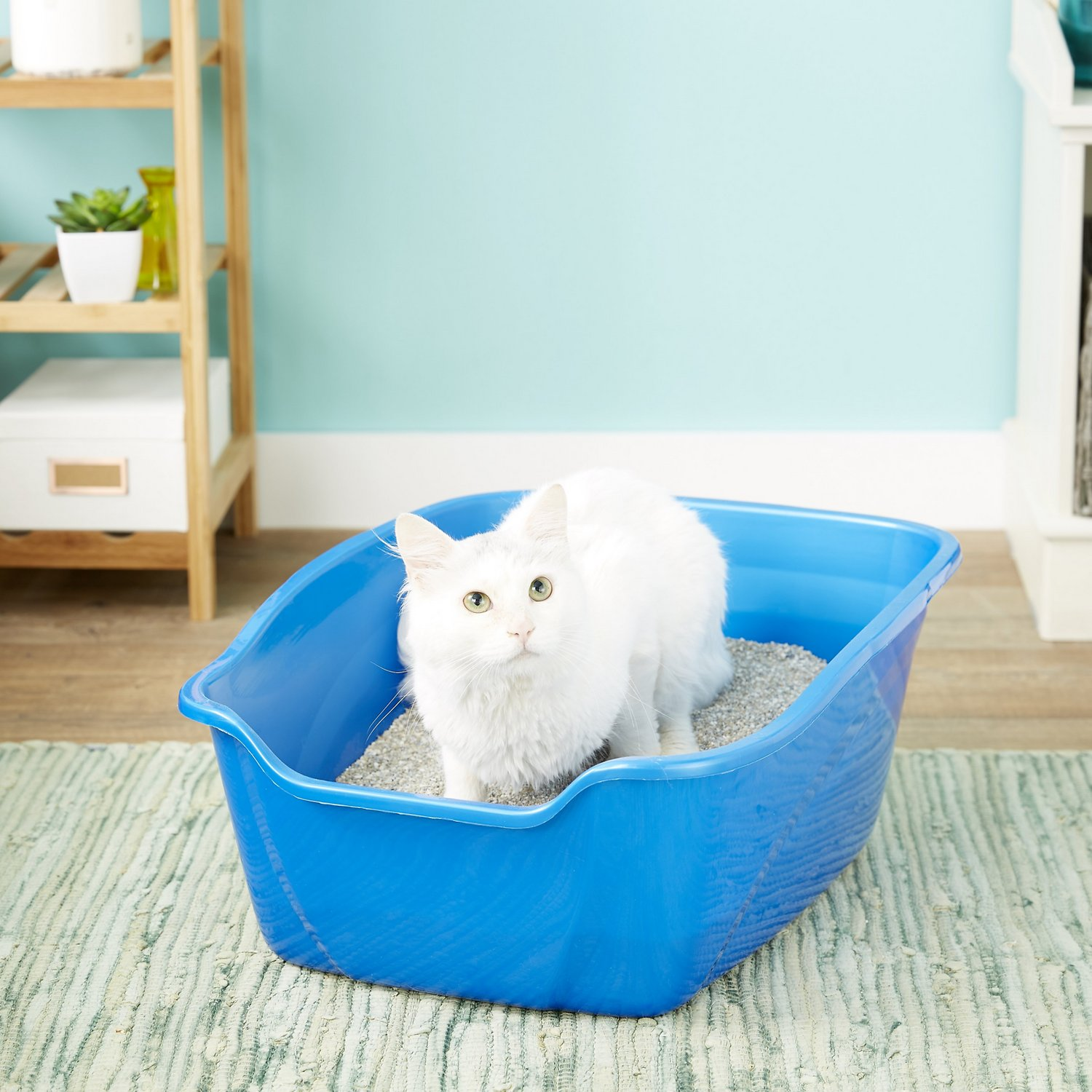 5 Best Litter Boxes For Multiple Cats in 2020   Beyond The ...
