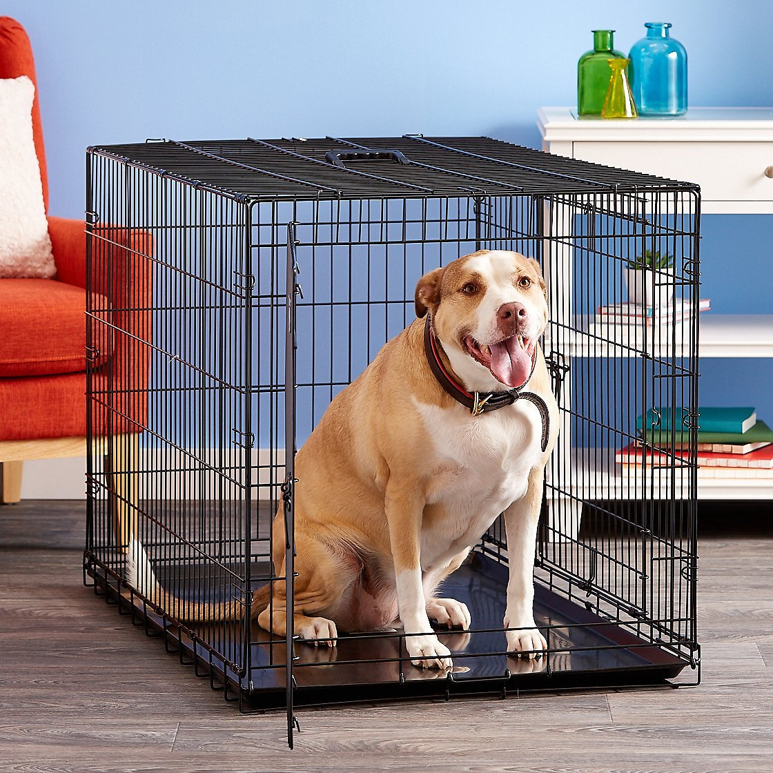video  sc 1 st  Chewy.com & Precision Pet Products Great Crate Double Door Dog Crate Large ...