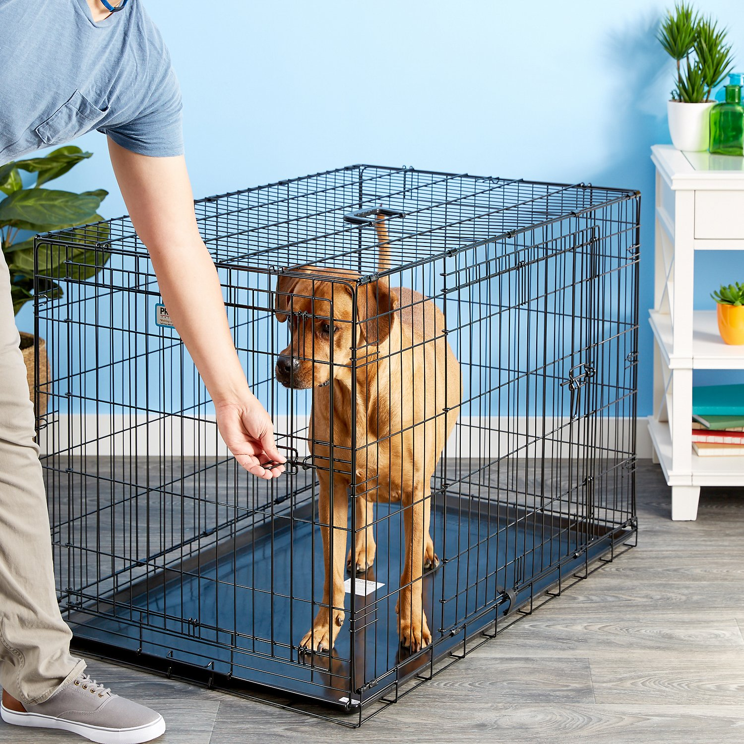 Precision pet products provalu double door dog crate for Double door with dog door