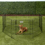 Precision Pet Products Ultimate Exercise Pen with Door, X-Small