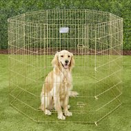 MidWest Exercise Pen with Step-Thru Door, Gold Zinc, 42-in