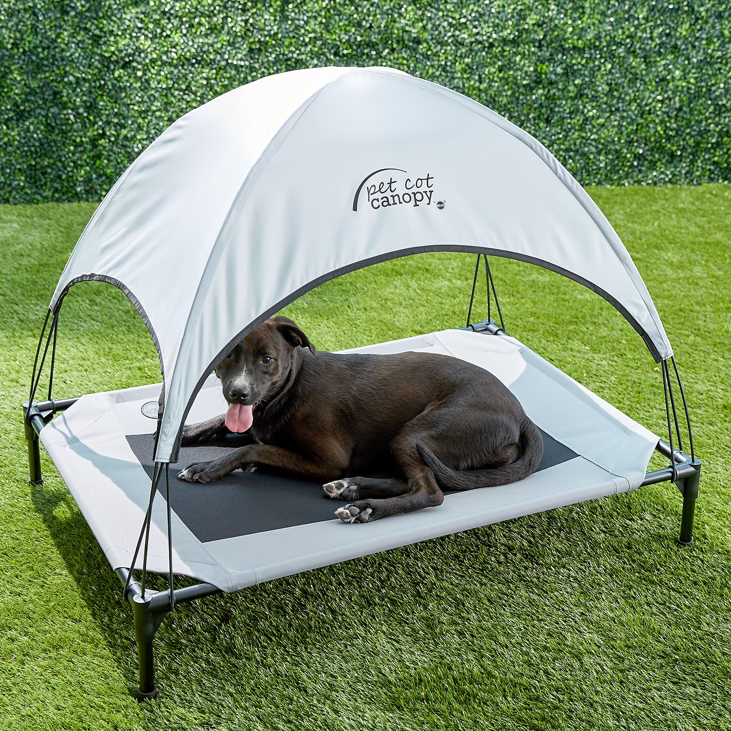 video & Ku0026H Pet Products Pet Cot Canopy Gray Large - Chewy.com