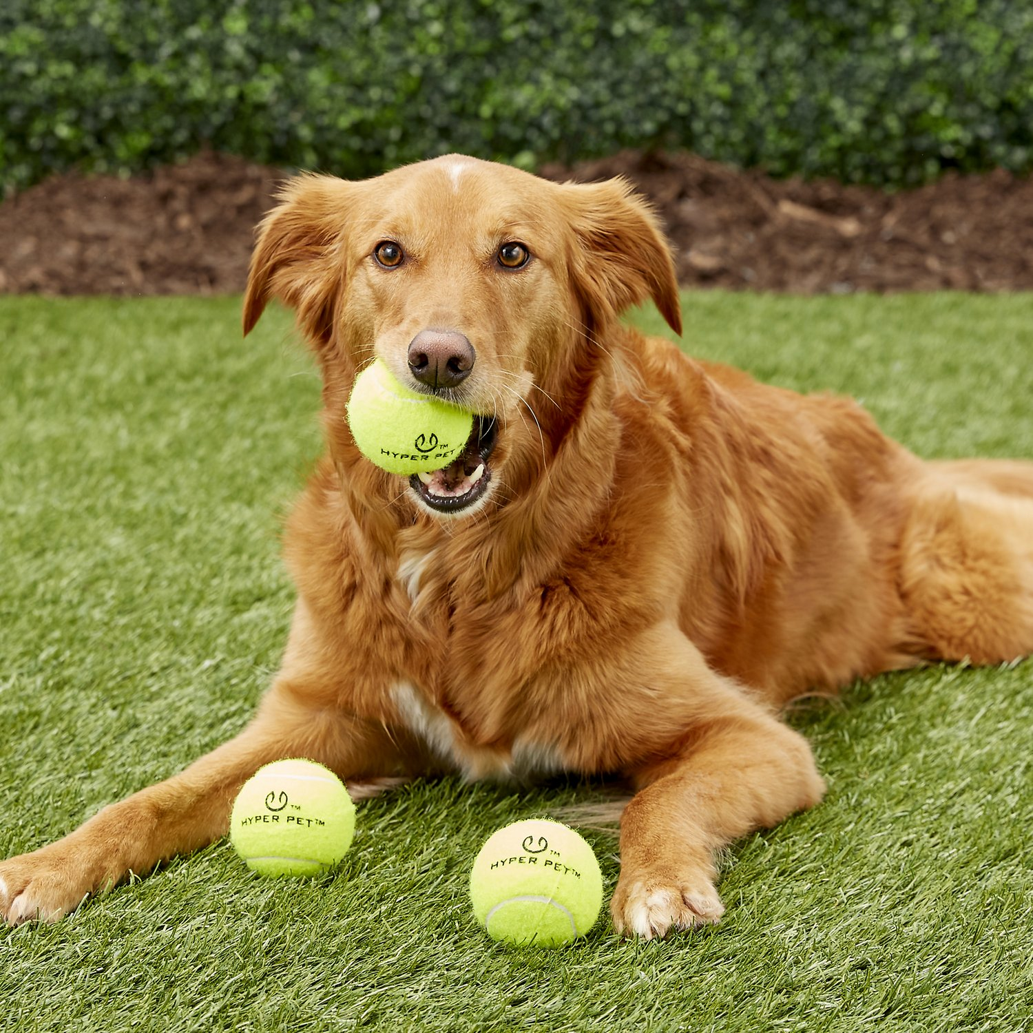 Hyper Pet 4 Pack of Balls for Dogs, Green, Regular - Chewy.com