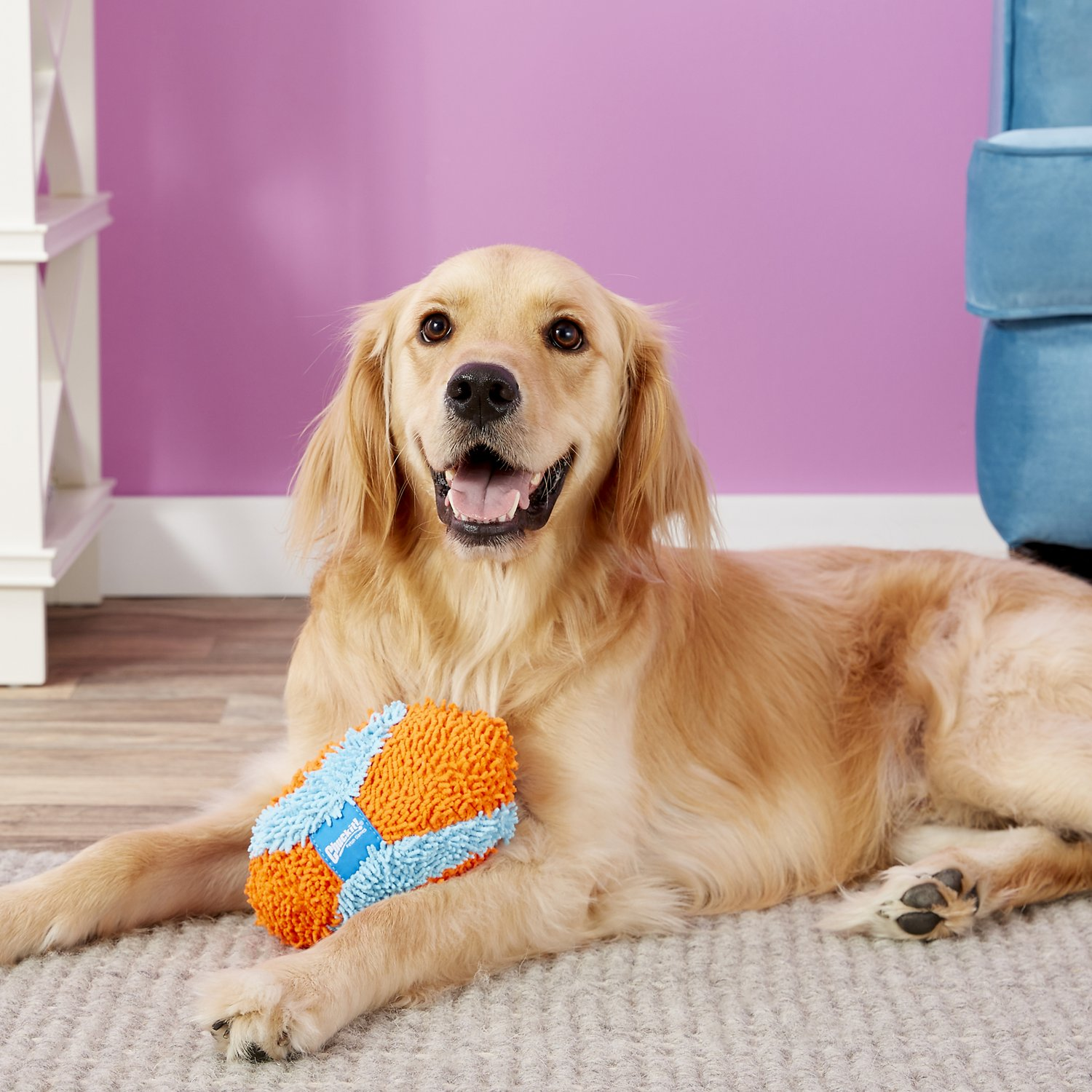 Chuckit! Indoor Fumbler Dog Toy - Chewy.com