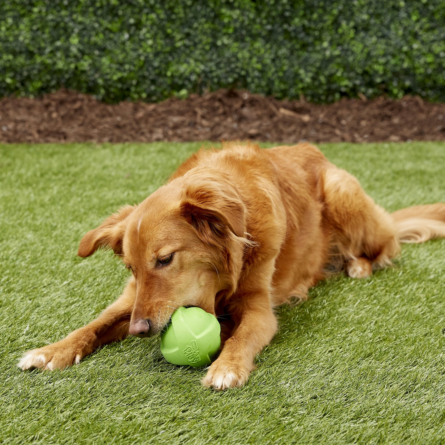 How to encourage your dog to play nicely with strange dogs ...  |Dog Play