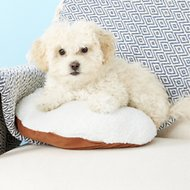 PetZu Heartbeat Pillow, Chocolate/White