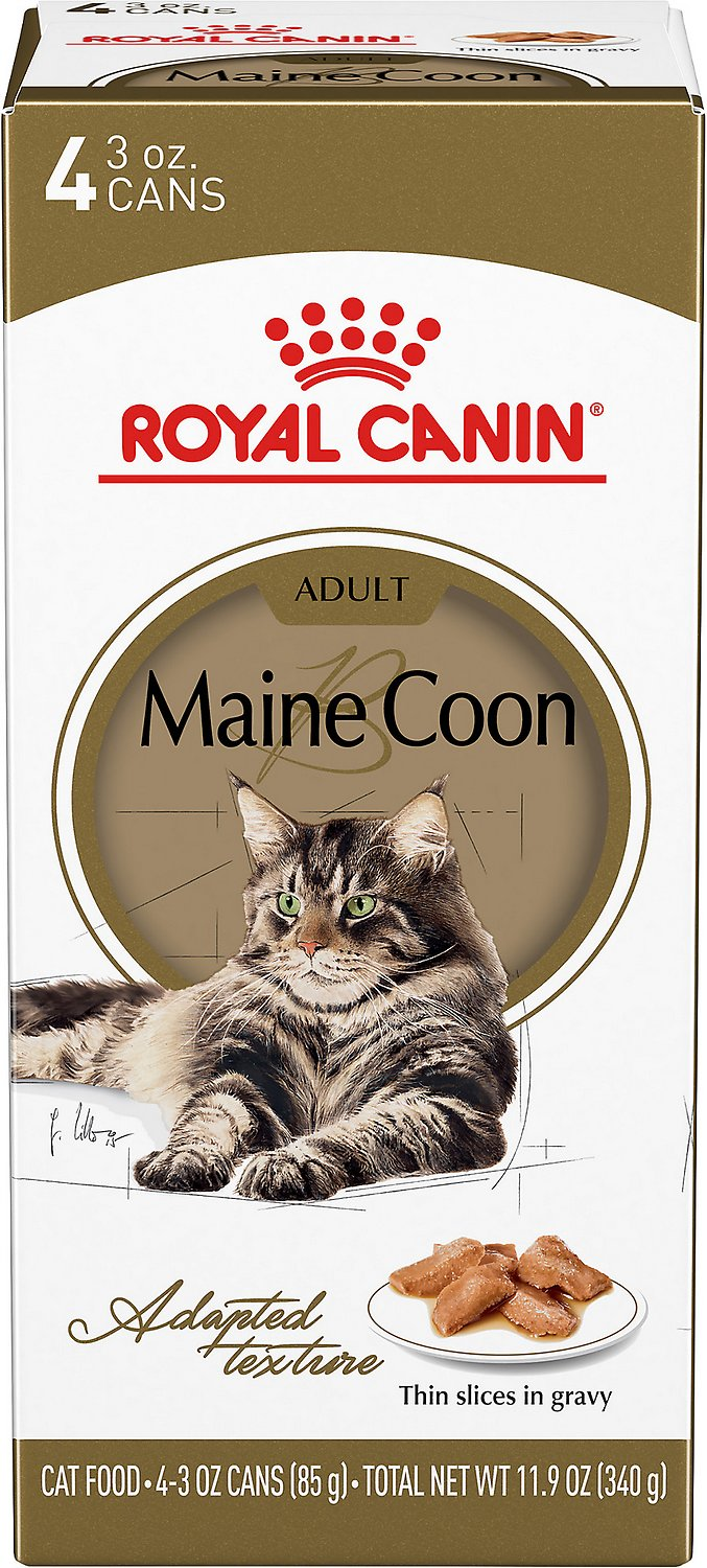 Royal Canin Feline Breed Nutrition Maine Coon Thin Slices In Gravy Canned Cat Food 3 Oz Pack Of 4 Chewy Com