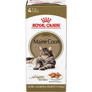 Royal Canin Feline Breed Nutrition Maine Coon Thin Slices In Gravy Canned Cat Food, 3-oz, pack of 4; Royal Canin Maine Coon Canned Cat Food was developed specifically for pedigreed Maine coon cats over 15 months old using Royal Canin's nutritional expertise and the practical knowledge of breeders. As the tallest and heaviest of the pure breeds, Maine coons have a large frame, which means they need extra joint support. This formula is enriched with omega fatty acids from salmon and fish oil plus glucosamine and chondroitin to support a Maine coon's hardworking bones and joints. Coat health is also extremely important for this unique breed because they have a very dense coat that requires significant care. A range of B vitamins along with omega 3 and 6 help nourish the skin and keep the coat full and healthy.